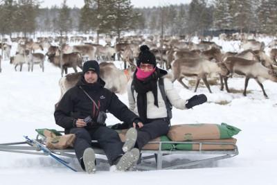 nourrissage des rennes