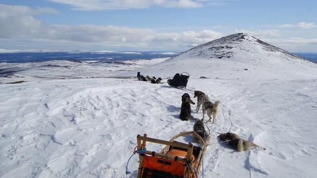 raid traineaux chiens laponie suédoise2