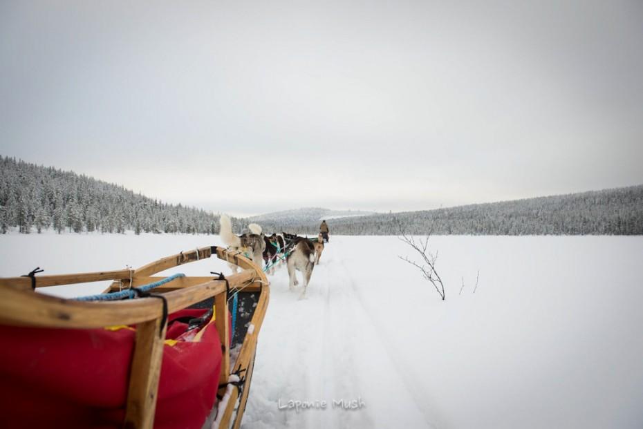 attelage de chien de traîenau vu de dos sur un lac gelé - voyage en laponie suédoise