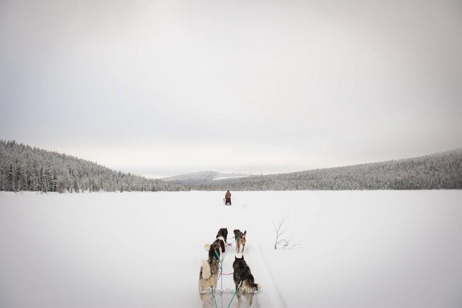 attelage de chien de traîneau vu de dos sur un lac gelé - voyage en laponie suédoise