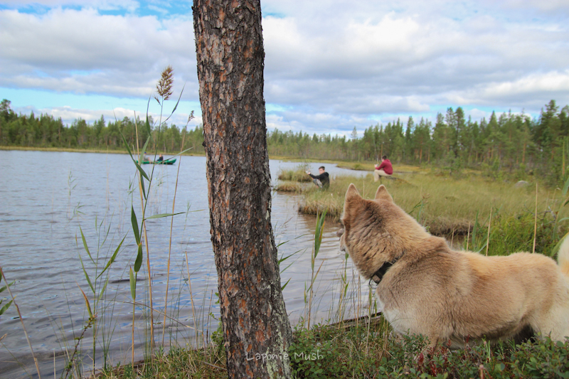 pêche sur un lac en laponie suédoise