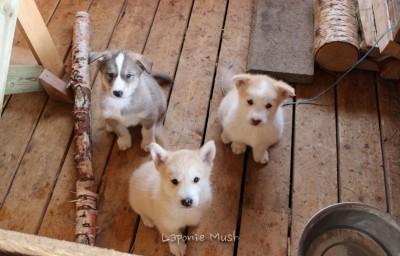 les 3 frangins petits