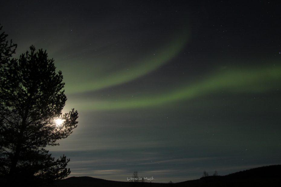 aurore-boreale-laponie-suedoise-4582