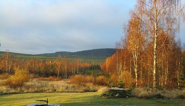 laponie-mush-automne-sejour-chien-traineau-hiver