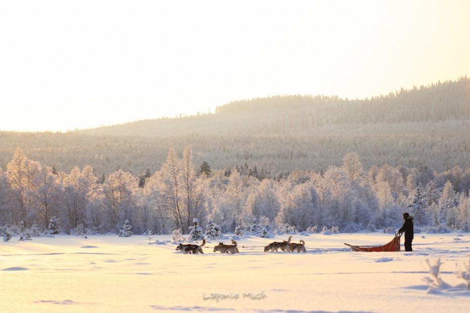 voyage et sejour chien de traineau en laponie suédoise, experience unique en plein coeur de la nature