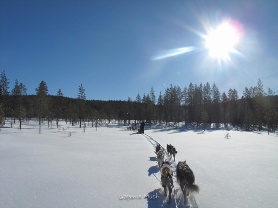 balade en traienaux à chien - voyage en laponie suédoise