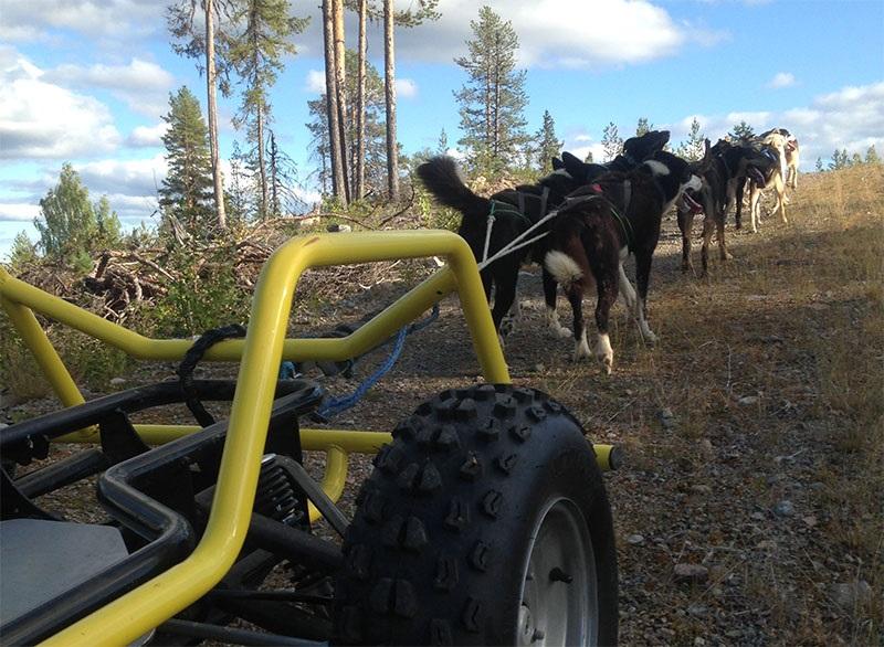 laponie-chien-traineau-entrainement-kart