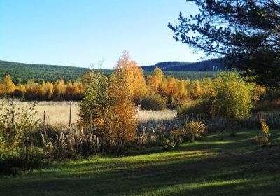 laponie-chien-traineau-sejour-paysage-automne