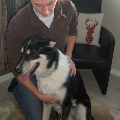 chien-traineau-sejour-osteopathie-canine