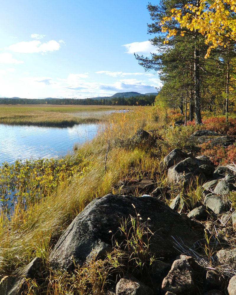 sejour-laponie-chiendetraineau-lac-automne-eteindien