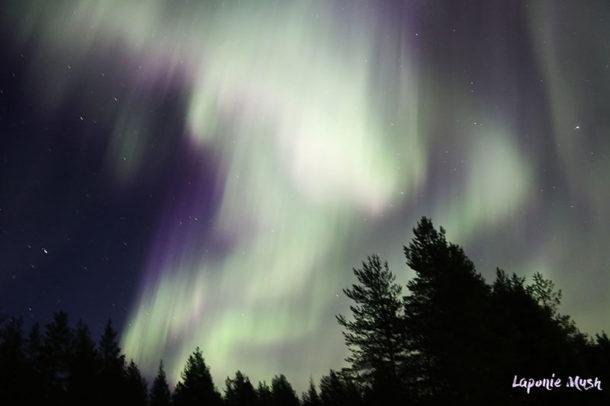 laponie-aurore-boreale-sejour-hiver-suede-chien-traineau