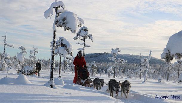 laponie-chien-traineau-hiver-attelage-suede-sejour