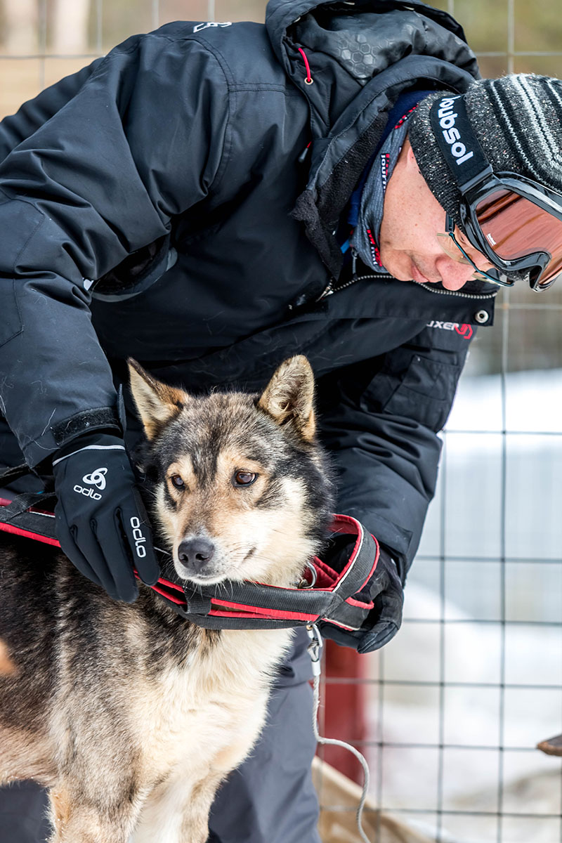 laponie chien de traineau randonnee sejour hiver husky