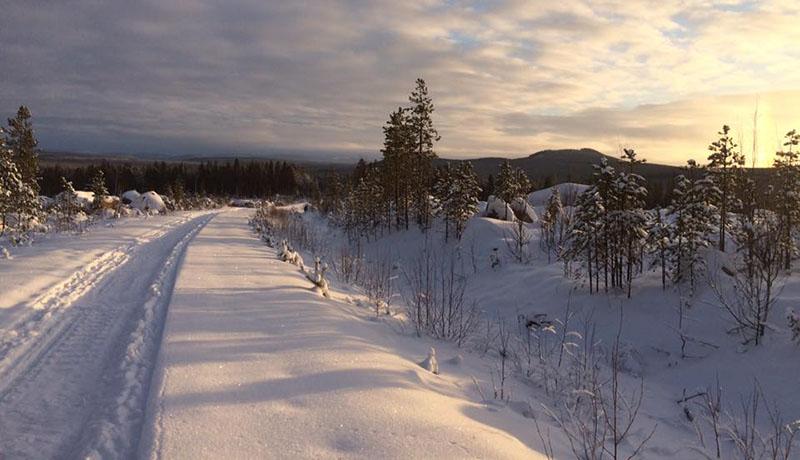 laponie-chien-traineau-sejour-hiver-tracage-piste-soleil