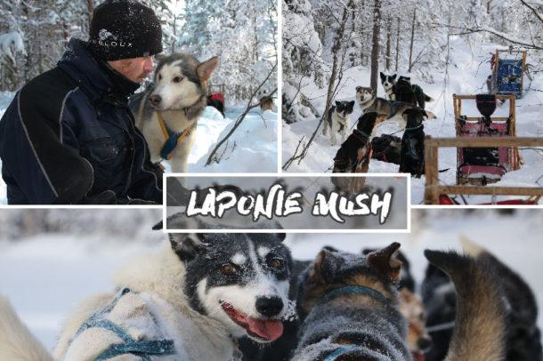 laponie-chien-traineau-sejour-suede-hiver