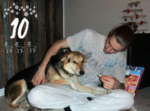 laponie-chien-traineau-suede-sejour-activites