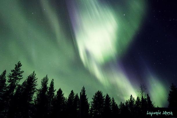 laponie-hiver-sejour-chien-traineau-aurore-boreale