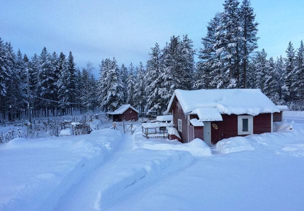 laponie-hiver-sejour-chien-traineau-chenil-suede