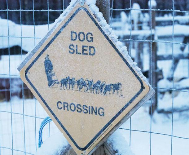 laponie-hiver-sejour-voyage-chien-dog-sign