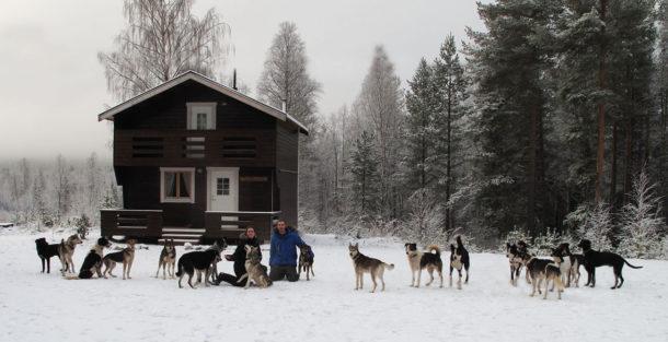 laponie-mush-sejour-laponie-suedoise-chien-traineau-premiere-neige