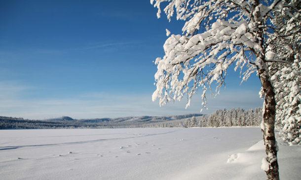 laponie-paysage-lac-sejour-hiver-chien-traineau-suede