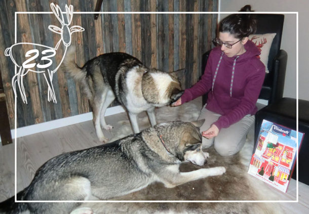 laponie-sejour-suede-chien-traineau-hiver-calendrier-alaskan-huskies