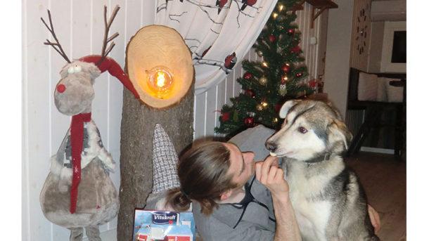 laponie-sejour-chien-traineau-hiver-calendrier