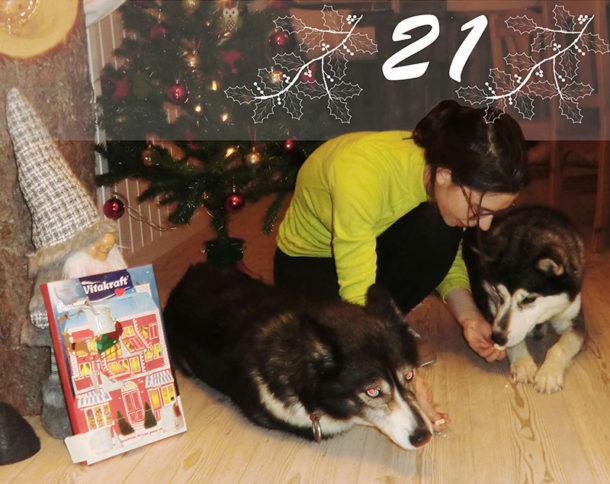 laponie-sejour-chien-suede-traineau-hiver-calendrier-suede