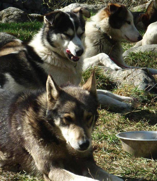 laponie-sejour-chien-traineau-hiver-ete-lac
