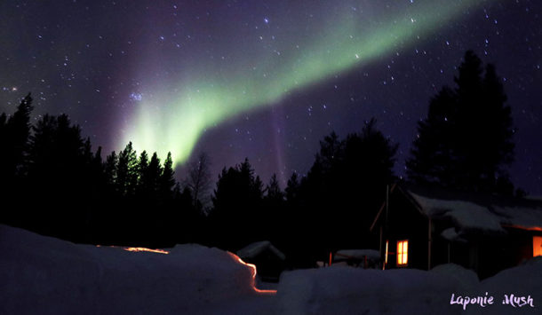 laponie-sejour-hiver-aurore-boreale-chien-traineau