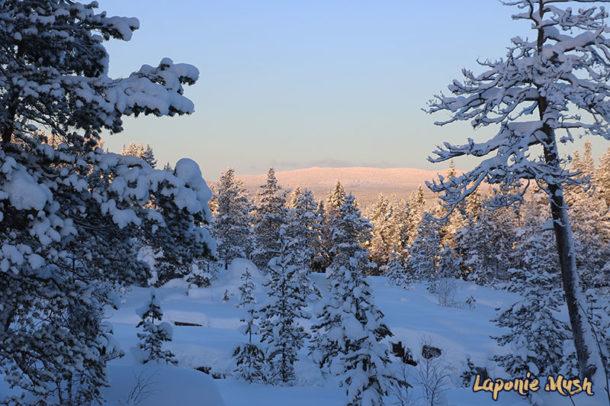 laponie-sejour-hiver-chien-traineau-paysage-sapins