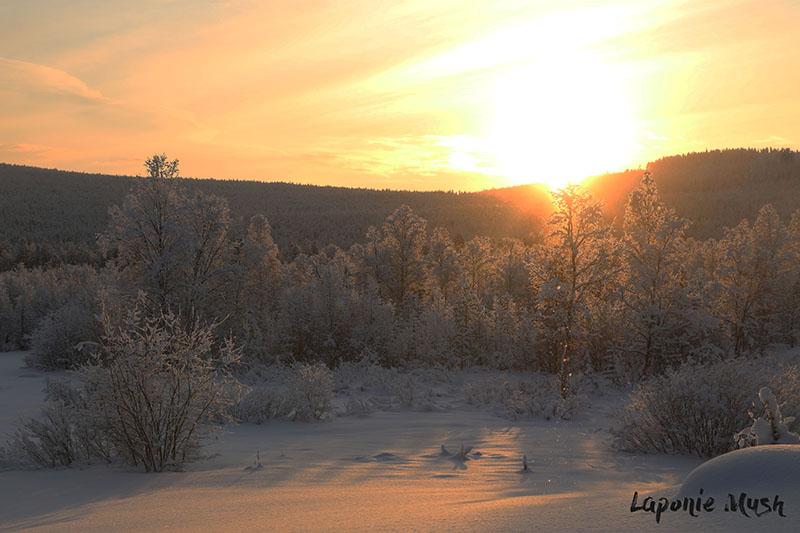 laponie-sejour-hiver-suede-soleil-chien-traineau