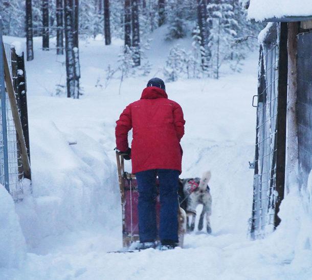 laponie-sejour-hiver-voyage-chien-traineau-suede