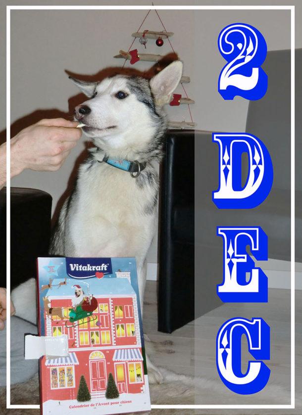 laponie-sejour-suede-traineau-chien-activites
