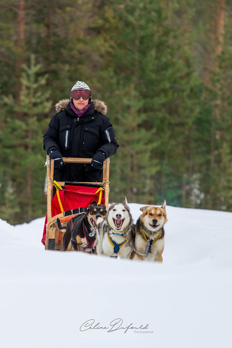 laponie suede chien de traineau sejour hiver