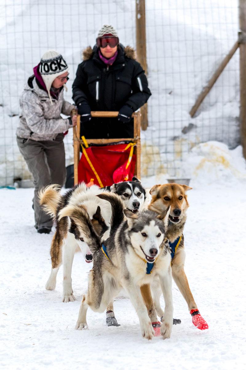 laponie suede sejour hiver chien de traineau