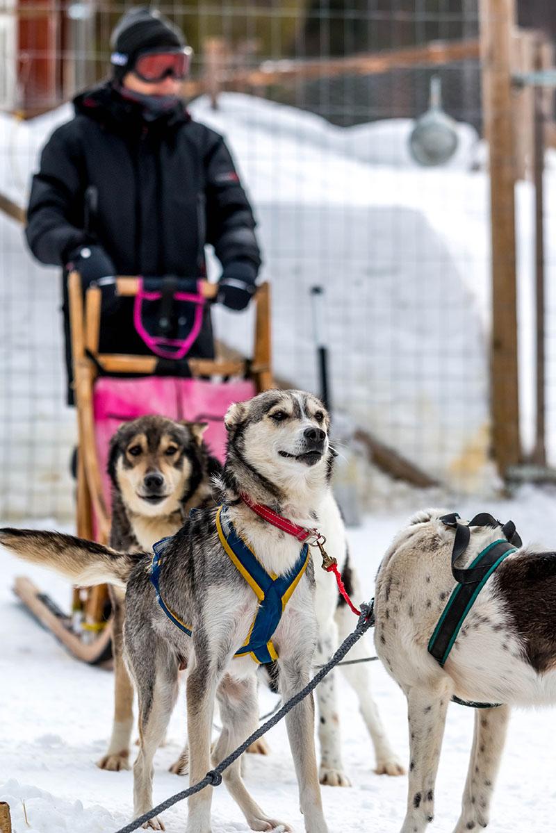 laponie suedoise depart attelage chien de traineau sejour d'hiver