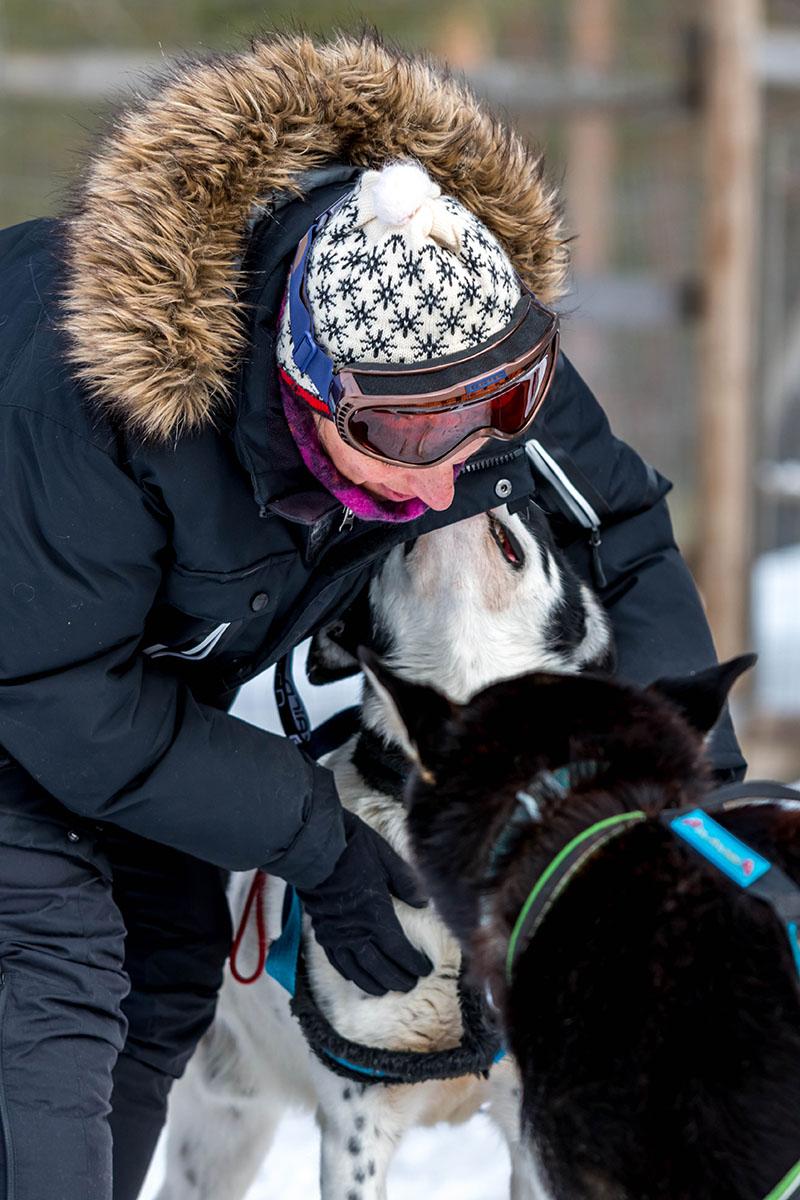 laponie suedoise sejour hiver chien de traineau retour randonnee