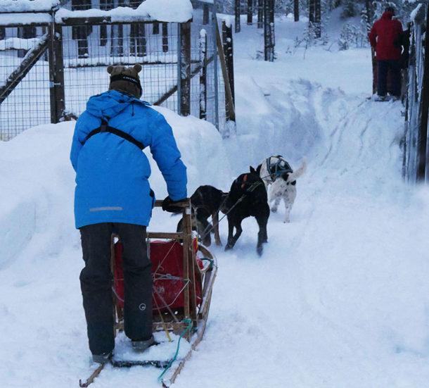 laponie-voyage-sejour-hiver-chenil-chien-traineau-suede