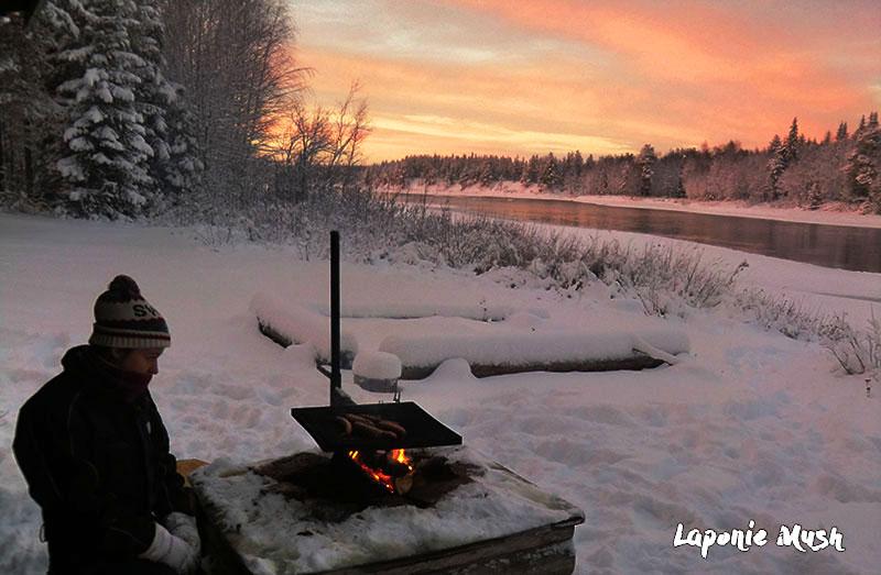 vivre une expérience hors du commun en laponie suédoise, sejour chien de traineau chez un hote musher