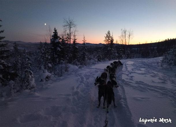 En Laponie Suédoise, dès l'arrivée des premières neiges, on sort le traineau pour l'entrainement des chiens sous un magnifique coucher de soleil