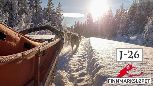 chien-traineau-course-finnmarkslopet-laponie-suede-entrainements