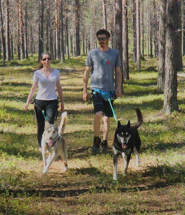 """Lors des séjours """"Soleil de Minuit"""", découverte en cani-randonnée de la Laponie Suédoise avec nos chiens de traineau"""