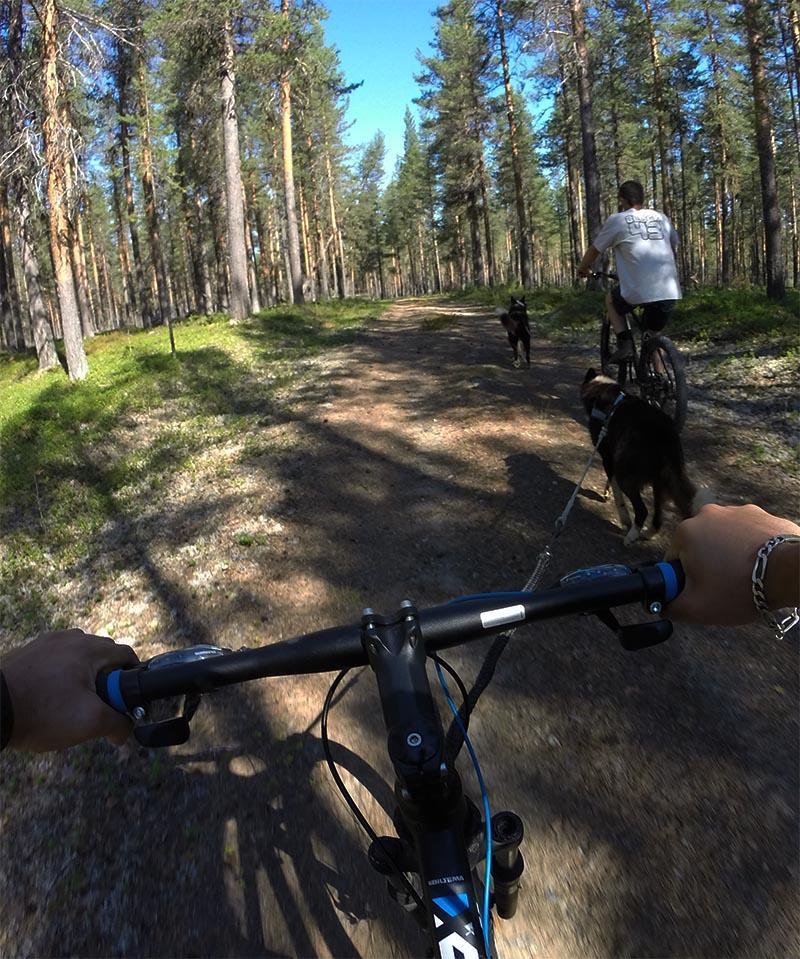 """Laponie Suédoise : Séjour """"Soleil de Minuit"""", cani VTT en pleine Nature en compagnie des chiens de traineau"""