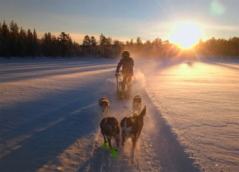 Traversée du lac gelé en chien de trianeau pendant un sejour d'hiver en Laponie Suédoise