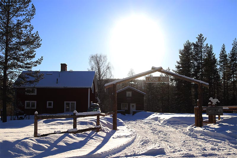 laponie mush sous le soleil d'hiver en laponie suédoise