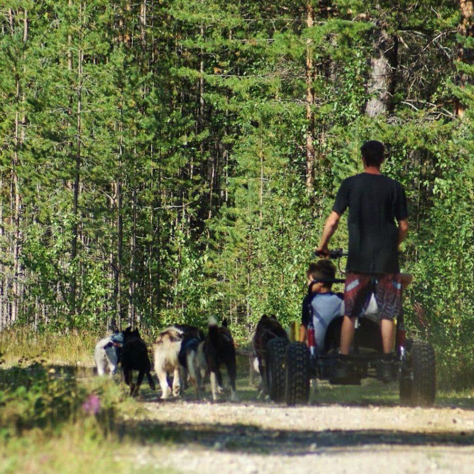 voyage et séjour d'été en laponie suédoise, randonnée en chiens de traineau sous le soleil de minuit