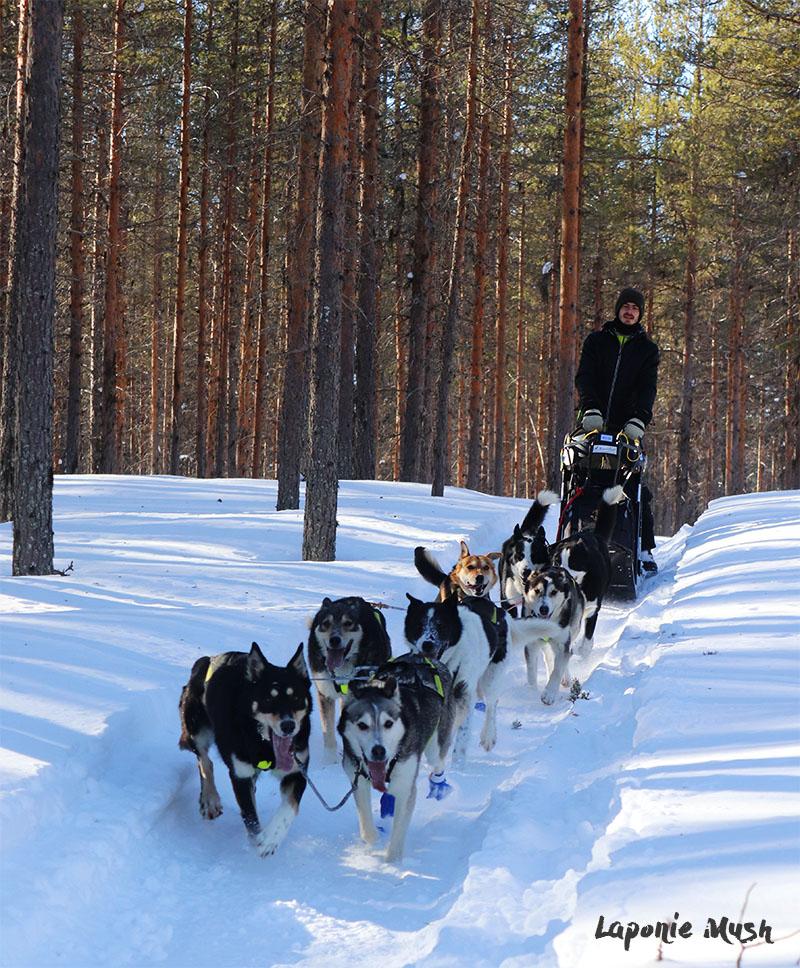 nord-suede-traineau-chien-sortie-sejour-hiver-laponie-bonheur