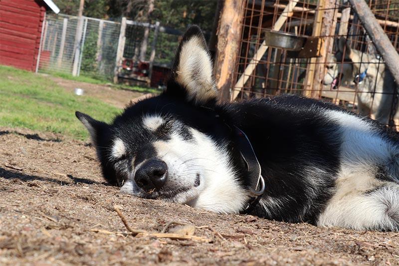 activités d'été pour les chiens, Dyguer bronze au soleil