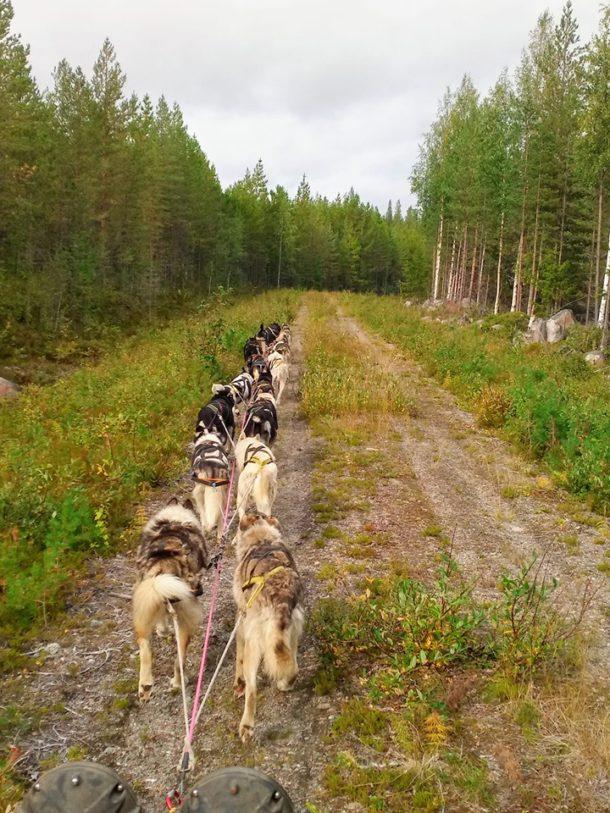 reprise des entrainements pour les chiens